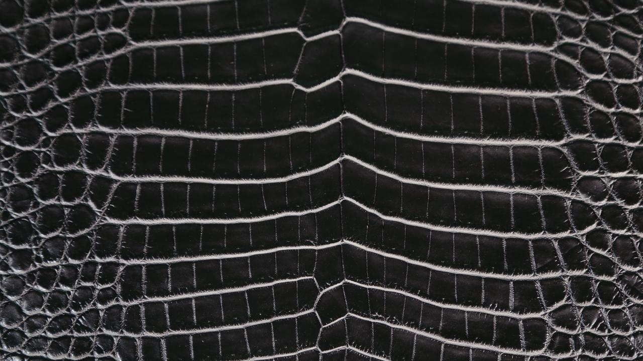 Nile Crocodile - Matte Waxy - Two Tone Black Base & White Under Scales